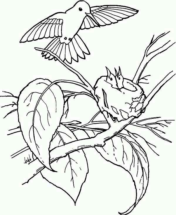 Hummingbirds, : hummingbird-feed-juniors-coloring-page.jpg