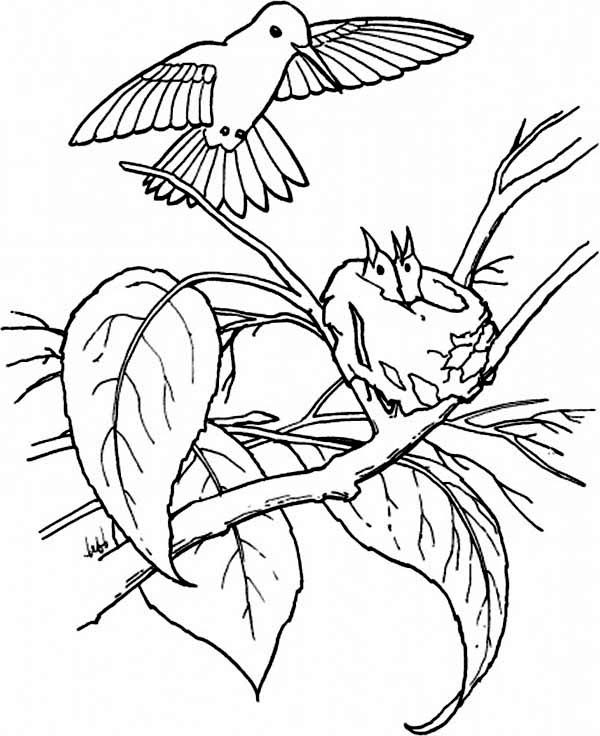 Hummingbirds, : hummingbird-feeds-their-young-coloring-page.jpg