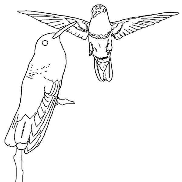 Hummingbirds, : hummingbird-fly-and-perch-position-coloring-page.jpg