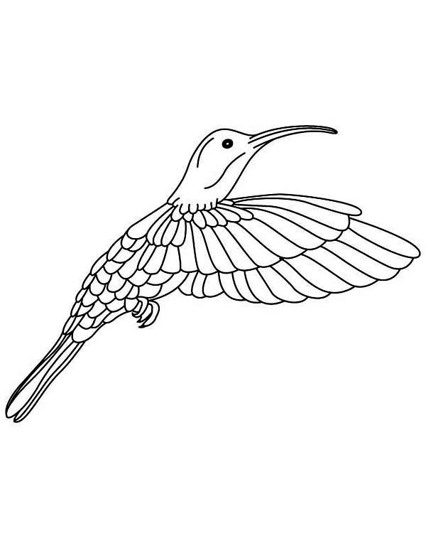 Hummingbirds, : hummingbird-still-image-coloring-page.jpg