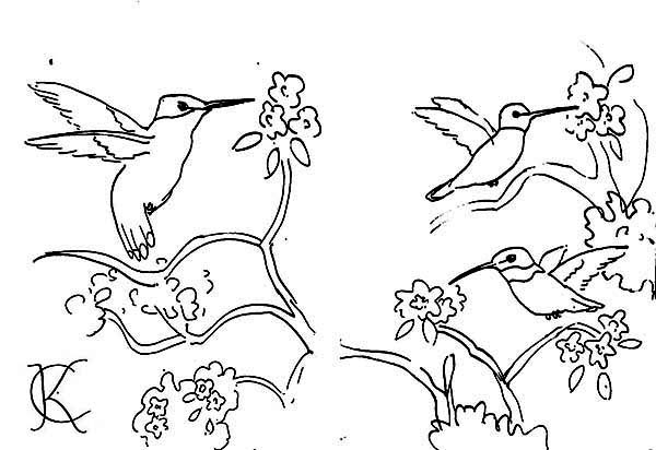 Hummingbirds, : hummingbirds-sketch-by-ck-on-coloring-page.jpg