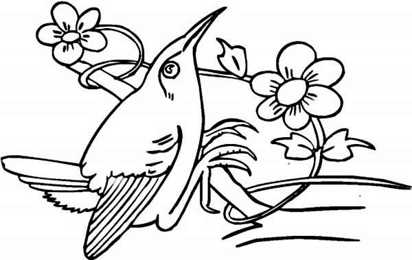 Hummingbirds, : short-beak-hummingbird-perched-on-a-tree-branch-coloring-page.jpg