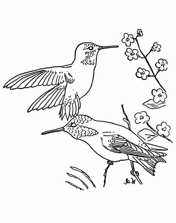 Hummingbirds, : two-ruby-throated-coloring-page.jpg