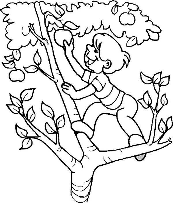 Apple Tree, : A Boy Climb an Apple Tree Coloring Page