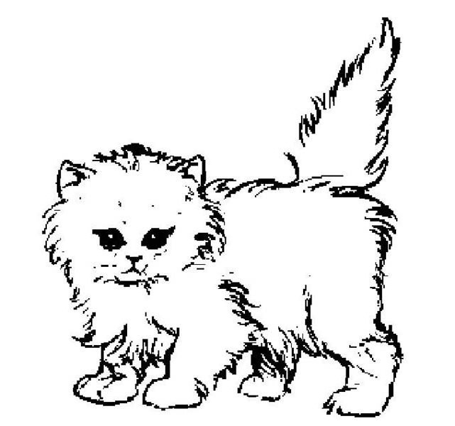 Kitty Cat, : A Cute Pluffy Kitty Cat Coloring Page