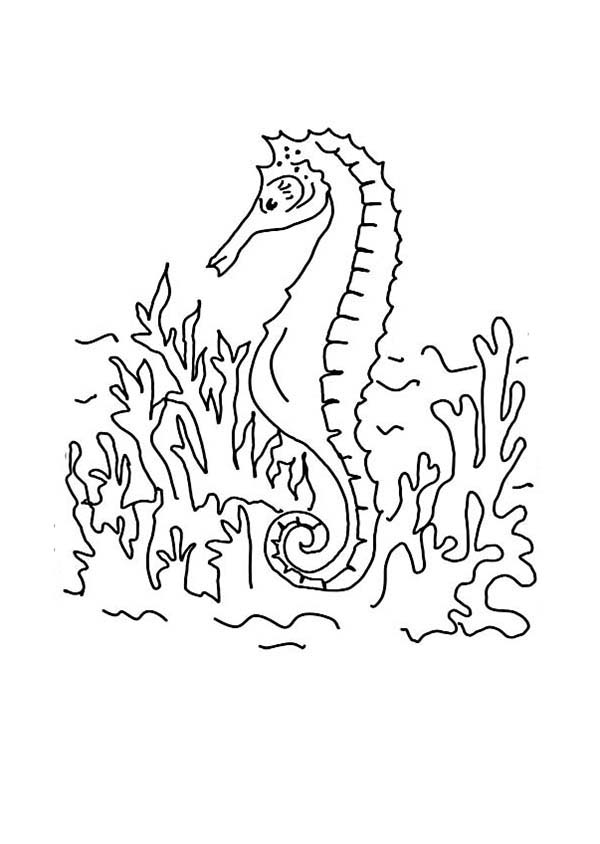 Seahorse, : A Drawing of Seahorse in the Seabed Coloring Page