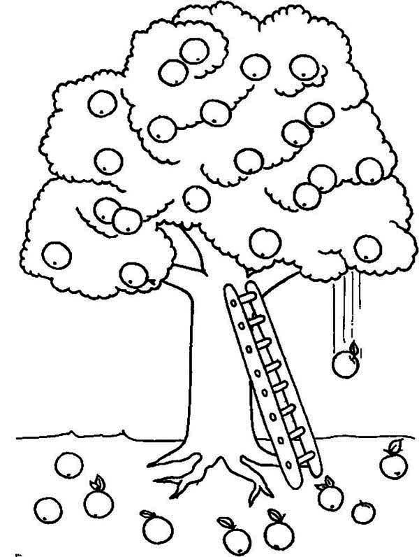 Apple Tree, : A Ladder Under Apple Tree Coloring Page