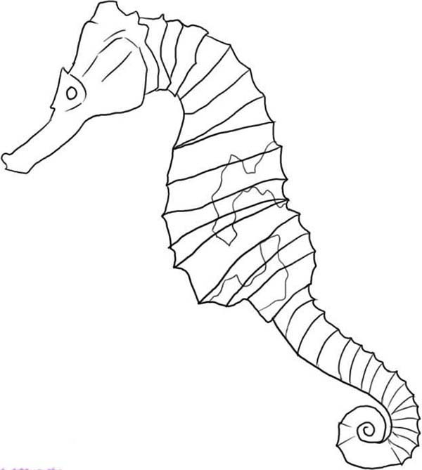 Seahorse, : A Pencil Drawing of Seahorse Coloring Page