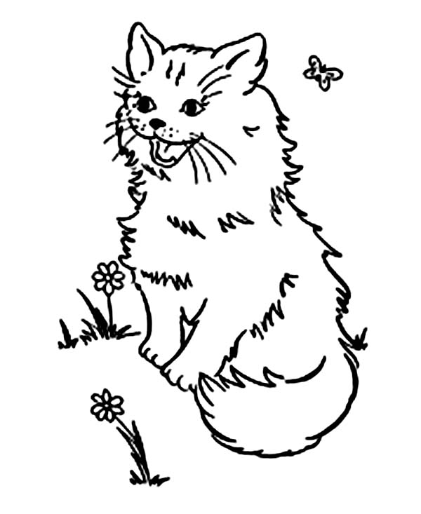 Kitty Cat, : A Pluffy Kitty Cat Playing on the Park Coloring Page