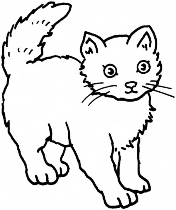 Kitty Cat, : A Sweet Kitty Cat with a Pluffy Hair Coloring Page