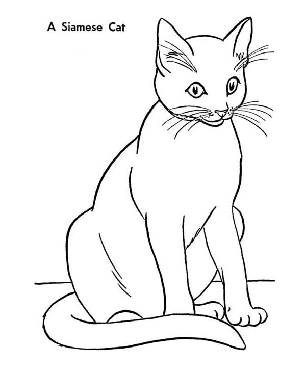 Kitty Cat, : An Elegant Siamese Kitty Cat Coloring Page