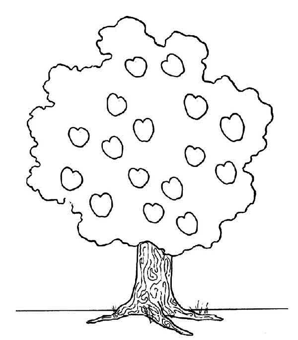 Apple Tree, : Apple Tree Picture Coloring Page