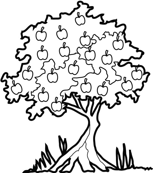 Apple Tree, : Apple Tree in The Forest Coloring Page