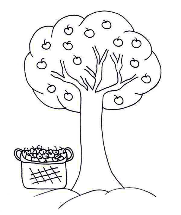 Apple Tree, : Basket Full of Apple and Apple Tree Coloring Page