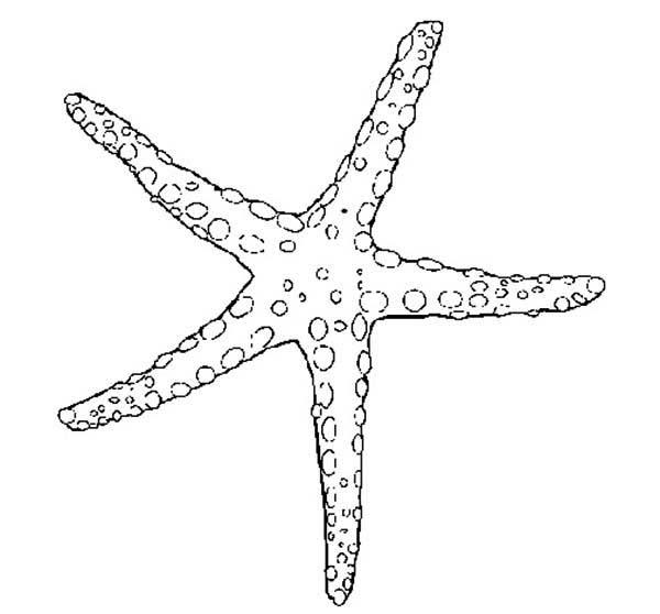 Starfish, : Beautiful Starfish Coloring Page