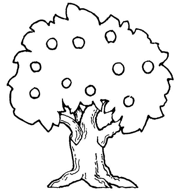 Apple Tree, : Big Apple Tree Coloring Page
