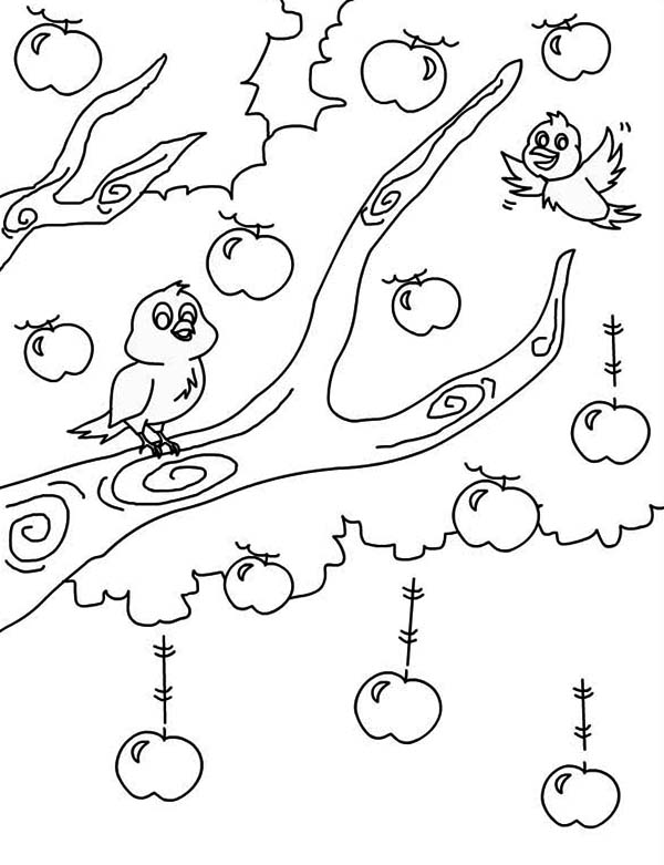Apple Tree, : Birds Singing Up an Apple Tree Coloring Page
