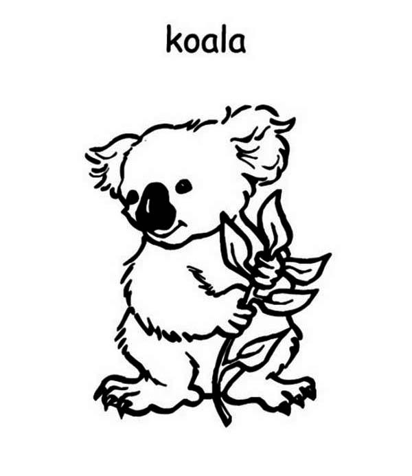 Australia Day, : Cute Koala on Australia Day Coloring Page