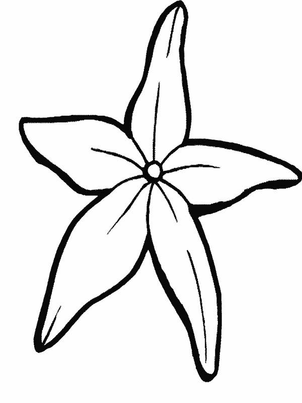 Starfish, : Fantastic Starfish Coloring Page