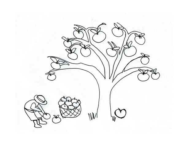 Apple Tree, : Farmer Collecting Apple Under an Apple Tree Coloring Page