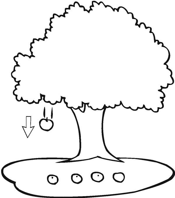 Apple Tree, : Four Apple Falling Under an Apple Tree Coloring Page