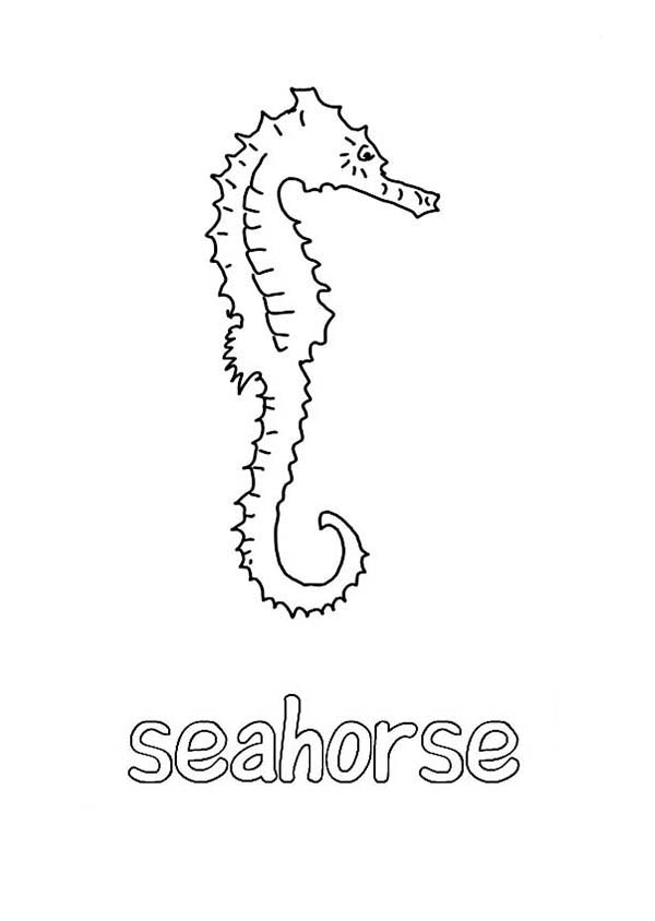 Seahorse, : Learn about Seahorse and Its Habitat Coloring Page