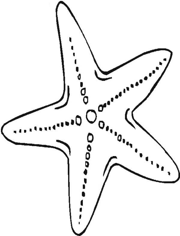Starfish, : Mother Starfish Coloring Page