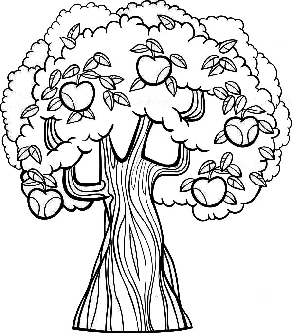Apple Tree, : Old Apple Tree Coloring Page