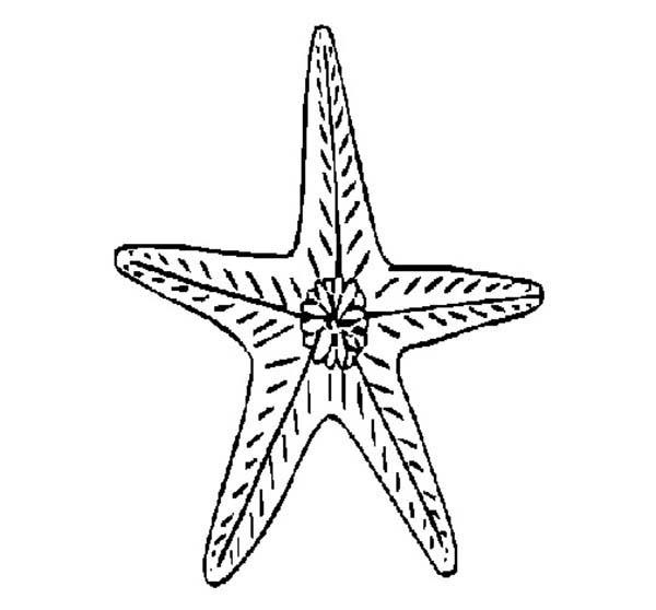 Starfish, : Preety Starfish Coloring Page