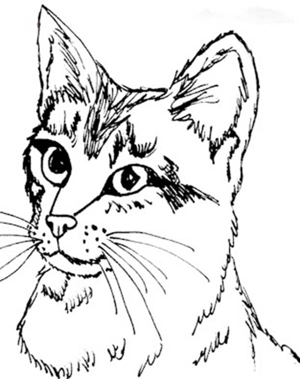 Kitty Cat, : Realistis Kitty Cat Head Figure Coloring Page