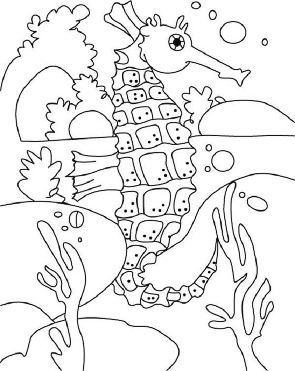 Seahorse, : Seahorse Eyes are Moving Independently Each Other Coloring Page