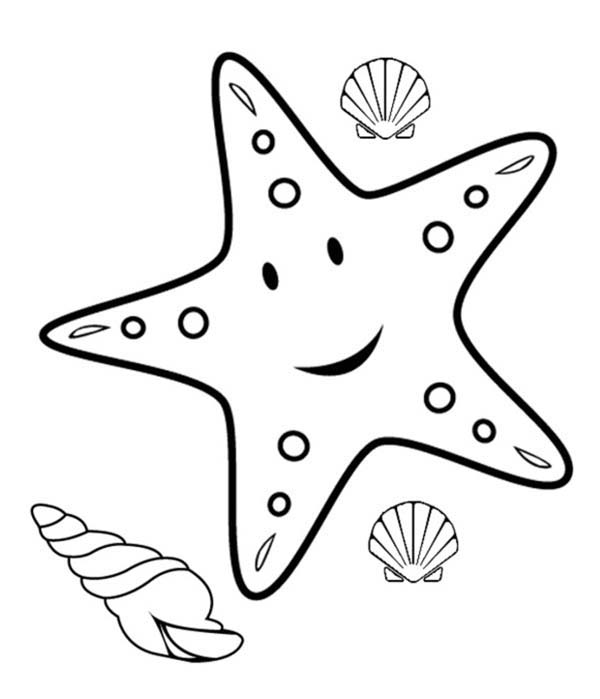 Starfish, : Starfish and Three Shell Coloring Page