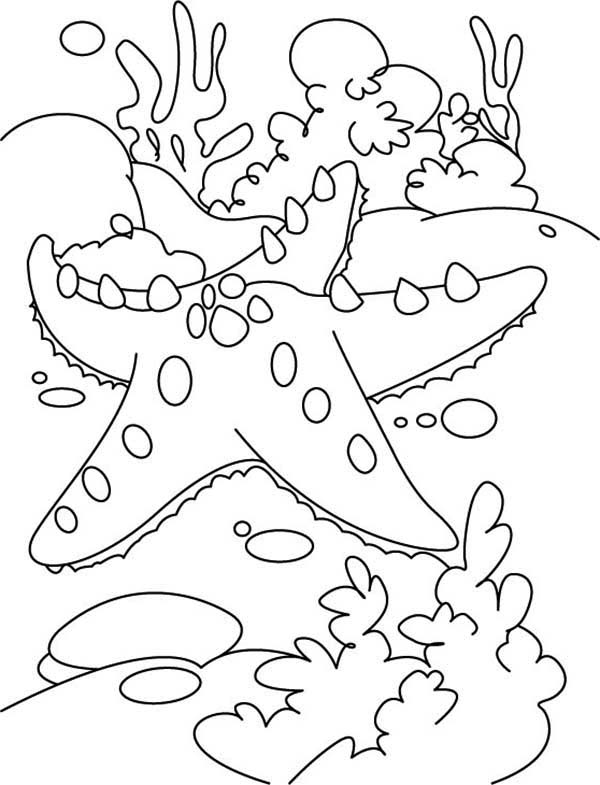 Starfish, : Starfish and the Coral Reef Coloring Page