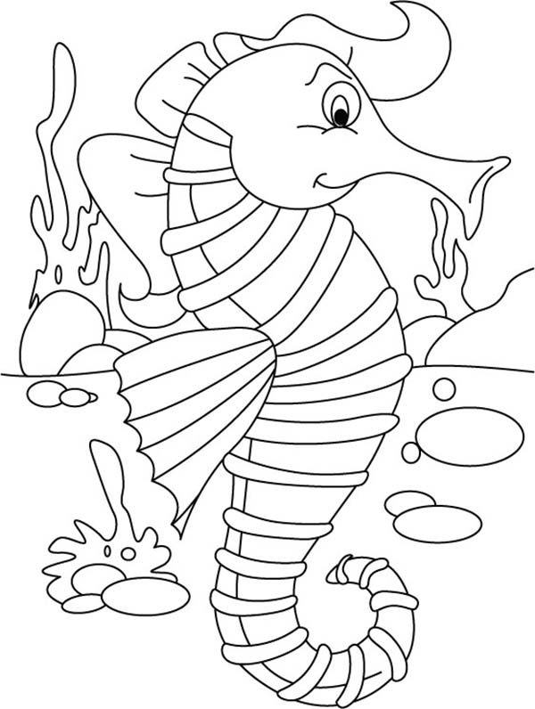 Seahorse, : Stylish Seahorse with a Long Topknot Coloring Page