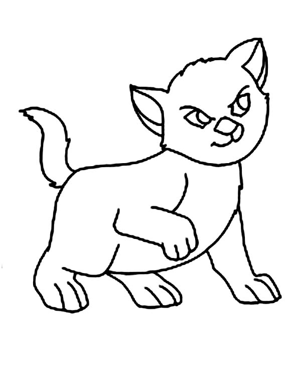 Kitty Cat, : These Kitty Cat is in a Bad Mood Coloring Page