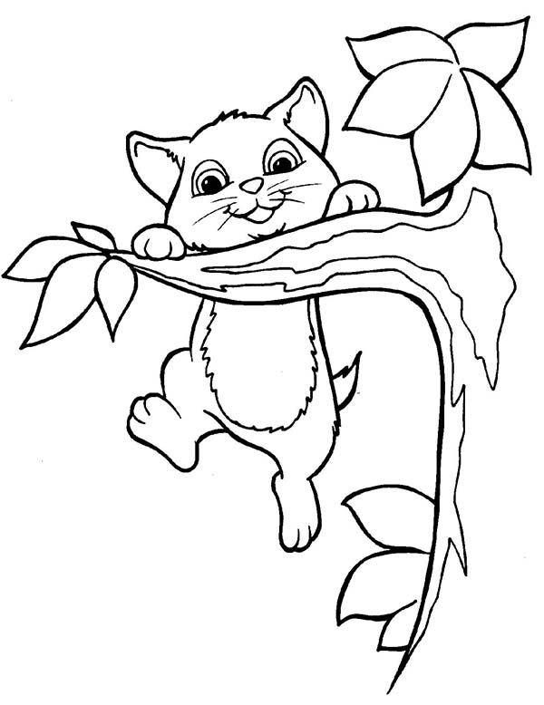 Kitty Cat, : This Active Kitty Cat Playing on a Tree Branch Coloring Page