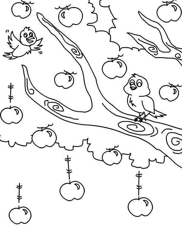 Apple Tree, : Two Birds and an Apple Tree Coloring Page