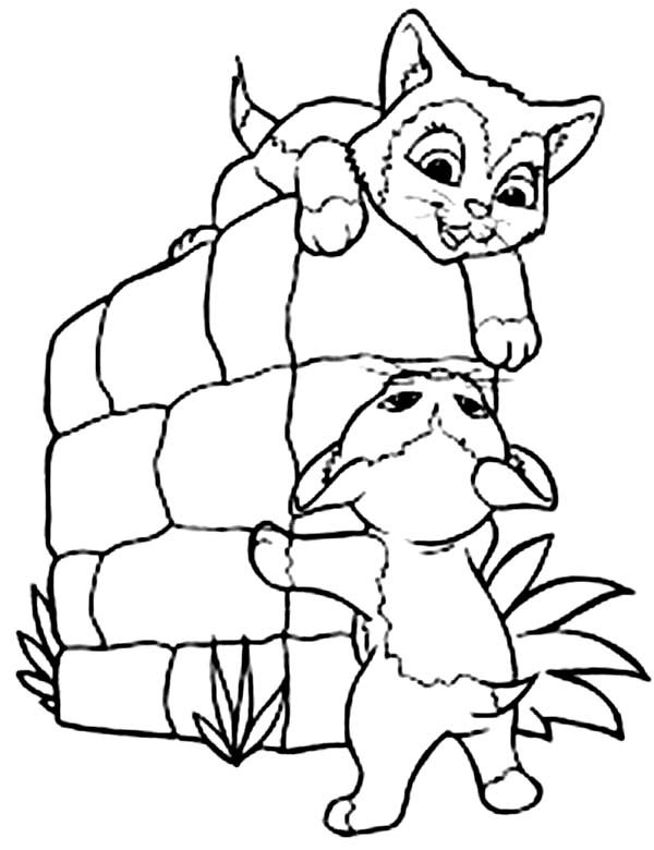 Kitty Cat, : Two Little Kitty Cat Playing Together Coloring Page