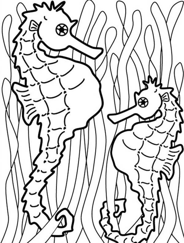 Seahorse, : Two Seahorse Hang onto Seaweed to Catch Food Coloring Page