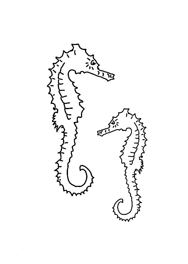 Seahorse, : Two Skinny Seahorse in the Seabed Coloring Page