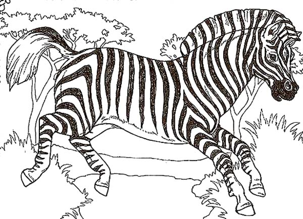 Zebra, : African Zebra Coloring Page
