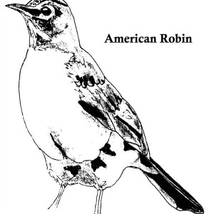 coloring pages robin tree - photo#8