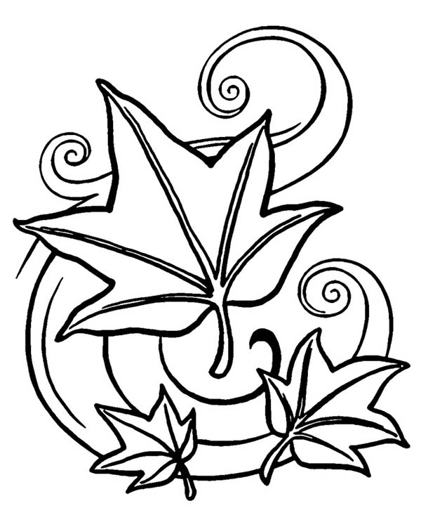 Fall Leaf, : Autumn Maple Fall Leaf Coloring Page