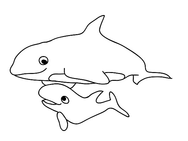Whale, : Baby Killer Whale and Her Mom Coloring Page