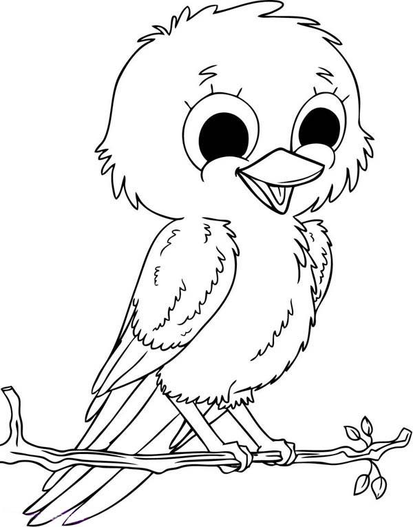 Robin, : Baby Robin Bird Coloring Page