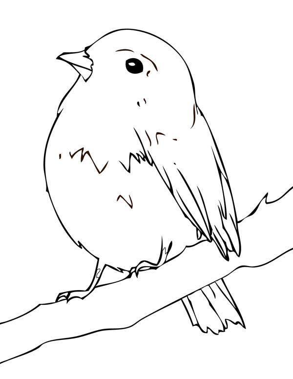 Robin, : Baby Robin Coloring Page
