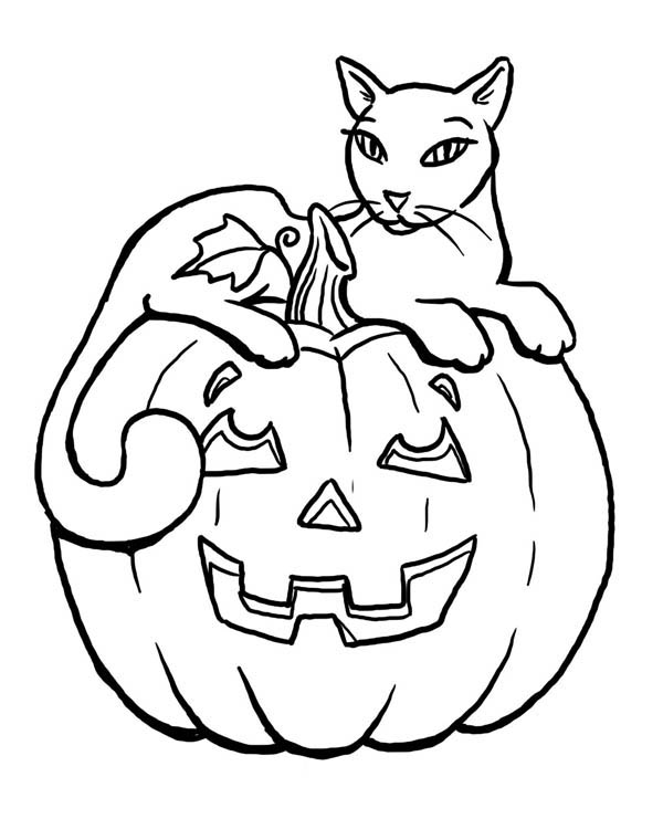 Pumpkins, : Beautiful Cat Sitting on Pumpkins Coloring Page
