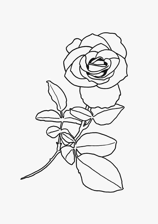 Flowers, : Beautiful Red Rose Flower Coloring Page
