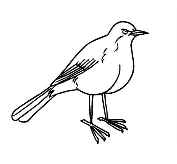 Robin, : Brown Back Robin Coloring Page