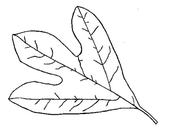 Fall Leaf, : Fall Leaf Coloring Page